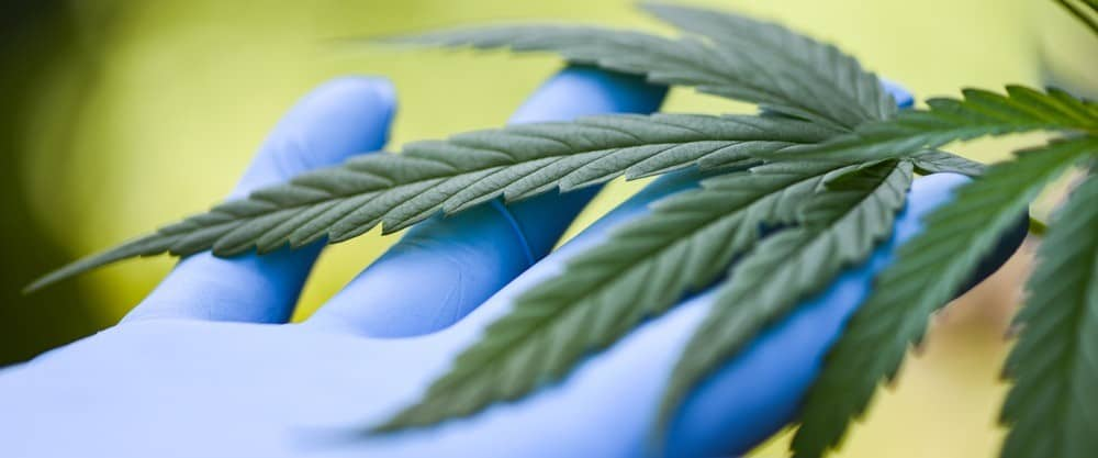 how to become a grower for a dispensary