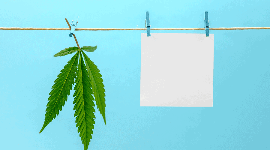 tips for cannabis businesses